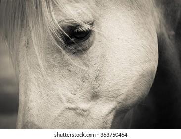 Mustang eye