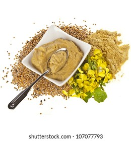 Mustard  dish sauce and mustard powder seeds and flower of mustard  on white