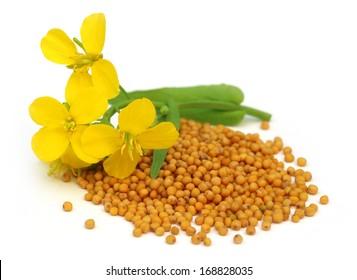 Emerald green & mustard yellow   Floral watercolor, Watercolor flowers, Clip  art