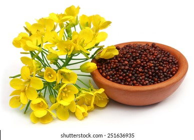 Mustard flowers and oil over white background