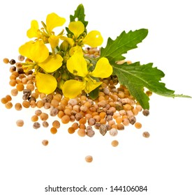 Mustard seeds heap and mustard flower isolated on white background