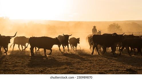 Mustering, Kimberley, Western Australia