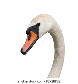 Mute swan (Cygnus olor) isolated on white