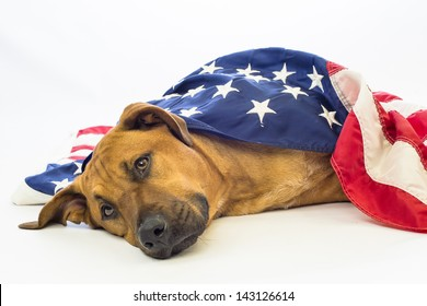 A mutt dog draped in American Flag mourns the loss of a patriotic friend