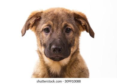 Mutt dog isolated