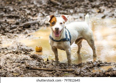 A mutt standing in a puddle of water with his ball.