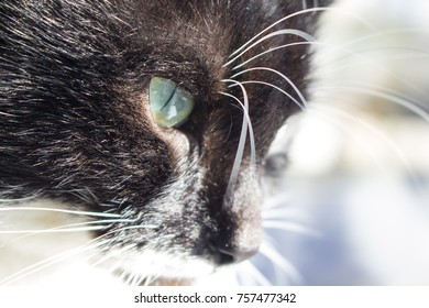 the muzzle of a beautiful black cat under the rays of the sun