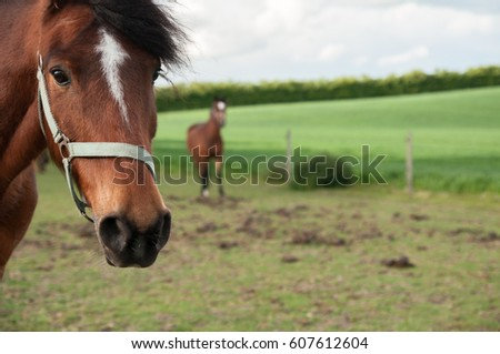 muzzle horse on a farm, crafty horse