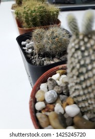 My cactus ,Cactus ,Nuture ,Nature on the desk ,Cactus on the desk
