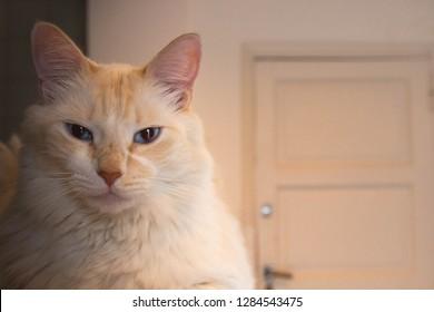 My cat, Aslan