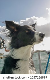 my dog on the boat
