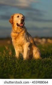 My dog Ralf portrait.