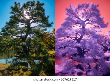 With My Eyes. Comparison of natural light versus my custom made extended IR sensor.  The photo on the right was taken with a specially modified camera. Both photos are as taken.