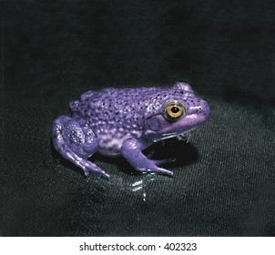 Image result for happy halloween purple frogs
