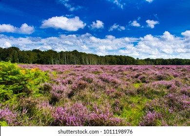 My first walk through the new forest in Hampshire in August