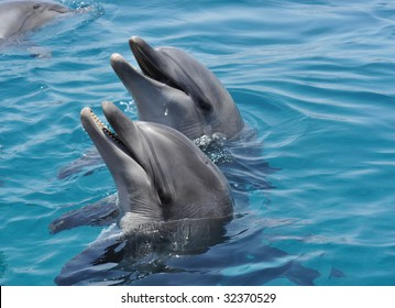 My friends dolphins