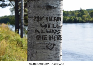My heart will always be here - Carved into tree