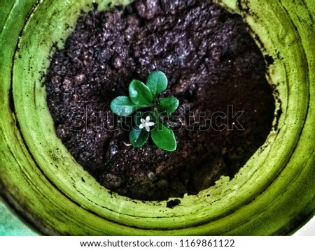 Shutterstock & My Little Flower Pot Home Stock Photo (Edit Now) 1169861122 ...