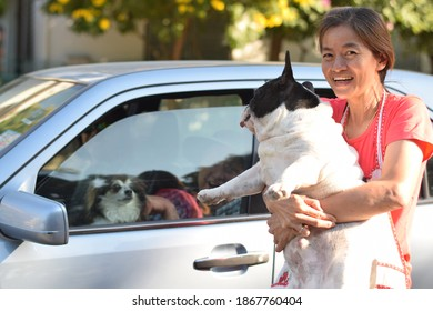 My neighbor dog greeting girl friend in morning of farther day's in Parichat village on 345 road, Phatumtani province, Thailand.Shoot on Dec,5 2020.