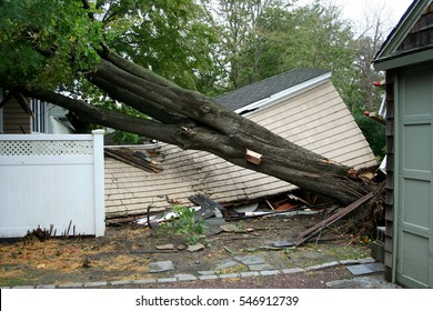 My neighbors garage has a tree on it after Super Storm Sandy
