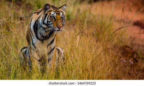 My New model from Bandhavgarh national park