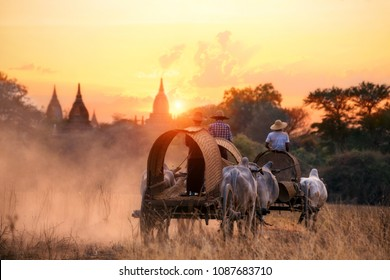 Myanmar Transport by local cattle carts of Bagan, Mandalay, Burma at sunset.