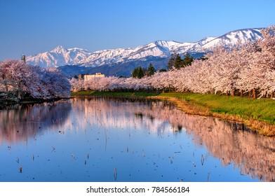 Myoko Range with Cherry Blossom in the foreground, Niigata, Japan