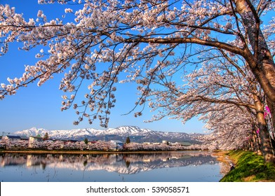 Myoko Range Reflection with Cherry Blossom in the foreground, Niigata, Japan