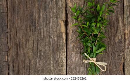 myrtle on wood