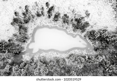 Mysterious animal shape on the frozen lake - aerial winter view