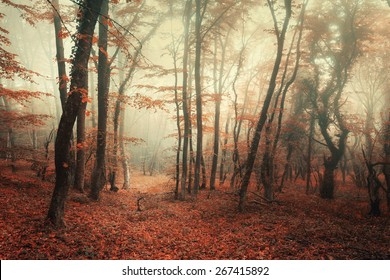 Mysterious autumn forest in fog with red and orange leaves in the morning in Crimea with magical atmosphere. fairytale