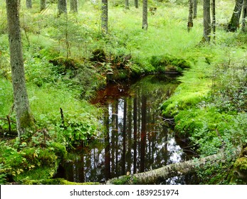 mysterious autumn forest reflected in the water of the stream