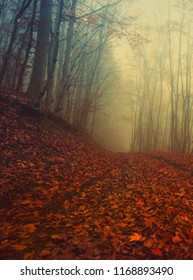 mysterious autumn landscape, colorful foggy image in the beech forest, road in red leaves in sunlight morning fog, vertical nature scenery, Carpathian mountains, Ukraine, Europe