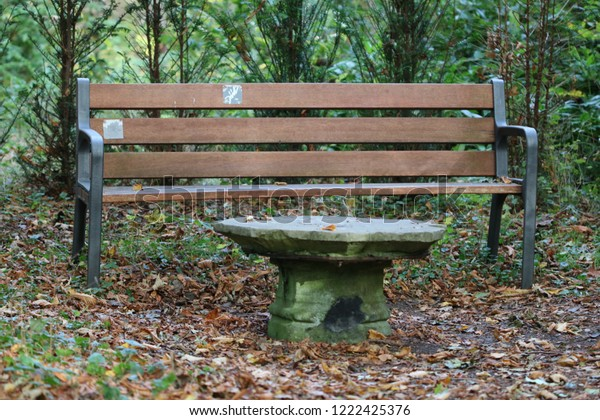 Mysterious Manteling Oostkapelle De Stock Bench Forest Photo 8mn0Nw