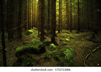 Mysterious coniferous forest with green stones and some glowing sunlight