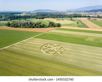 Mysterious crop circle emerged overnight in wheat field with beautiful pattern.