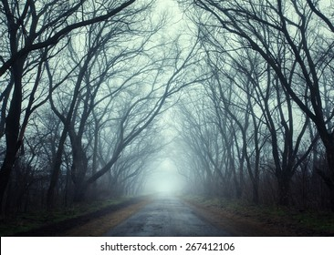 Mysterious dark autumn forest in fog with road, trees and branches . Autumn morning in Crimea (Mountain Ai-Petry)