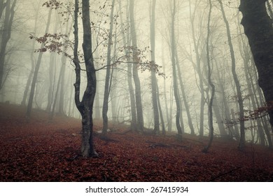 Mysterious dark autumn forest in  fog with red leaves, trees and branches. Autumn morning in Crimea (Mountain Ai-Petry)