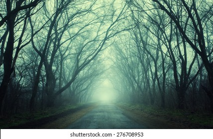 Mysterious dark autumn forest in green fog with road, trees and branches . Morning in Crimea
