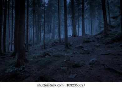 Mysterious dark blue night spruce forest.