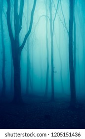 mysterious dark fantasy forest landscape