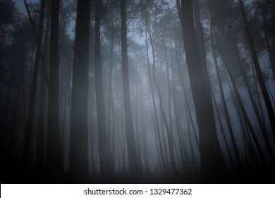 Mysterious dark foggy forest at dusk or night.