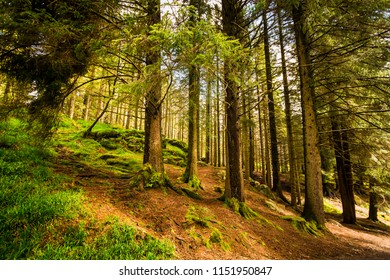 Mysterious dark forest in Bergen, Norway