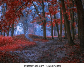 Mysterious dark forest in the morning in red. mystical autumn landscape. beautiful forest background.