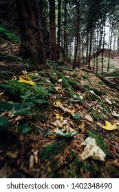 Mysterious dark forest with moss-covered forest floor, Portrait