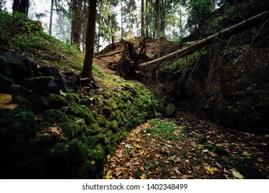 Mysterious dark forest with moss-covered forest floor