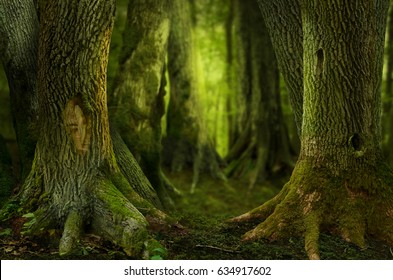 Mysterious dark forest, old hollowed trees with massive roots