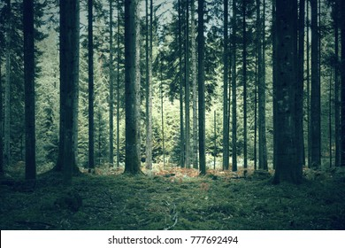 Mysterious dark green forest landscape.