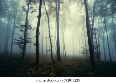 mysterious fantasy forest landscape with trees in fog