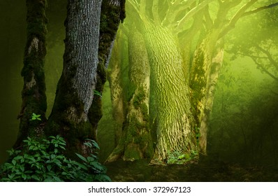 Mysterious fantasy forest with massive mossy trees and shine